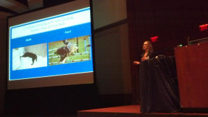 The North American Veterinary Conference